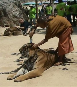 The monks seemed to really love the tigers